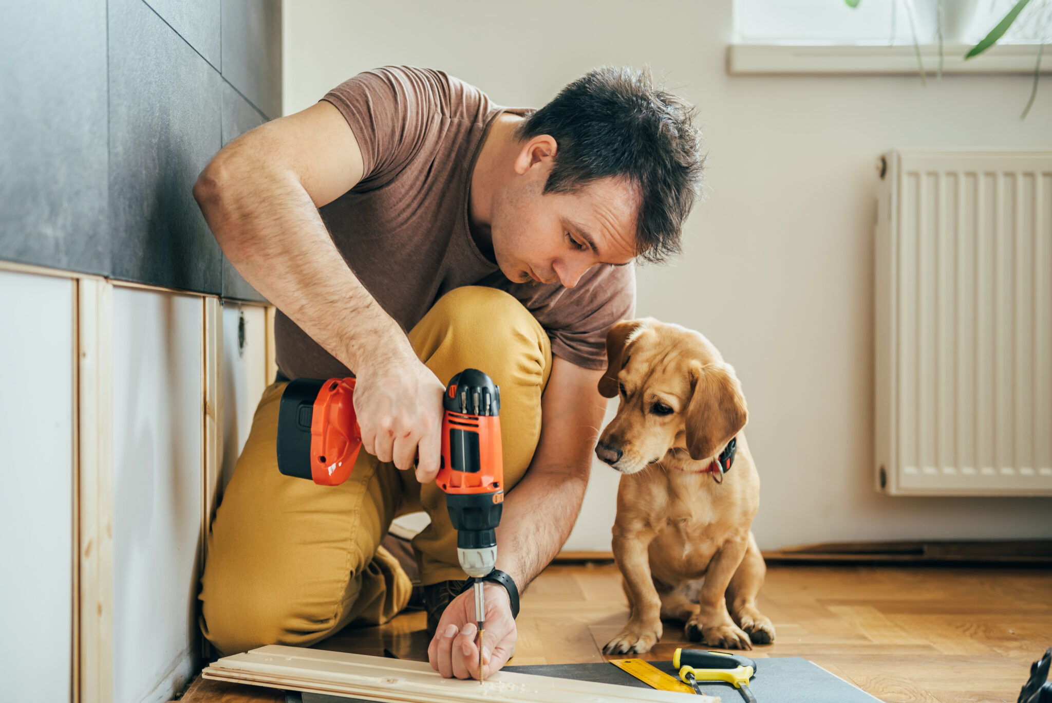 Man and dog home improvements